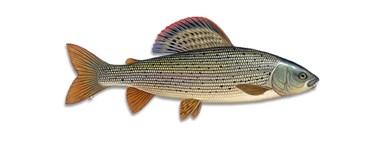 Kupa Fly Fishing logo